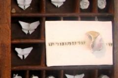 mariposa1def.4 Kopie 3